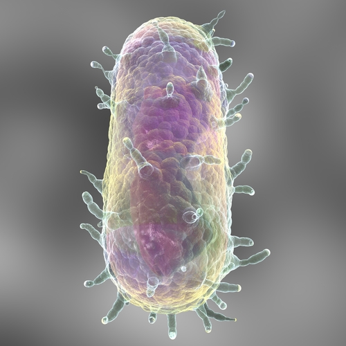 The parasite that causes bubonic plague